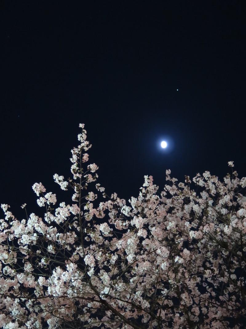 夜桜_b0249499_2402353.jpg