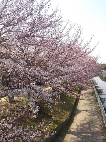 4月の花_e0289203_1434482.jpg