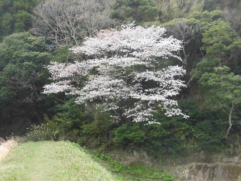 4月1日雨_f0192504_8502810.jpg