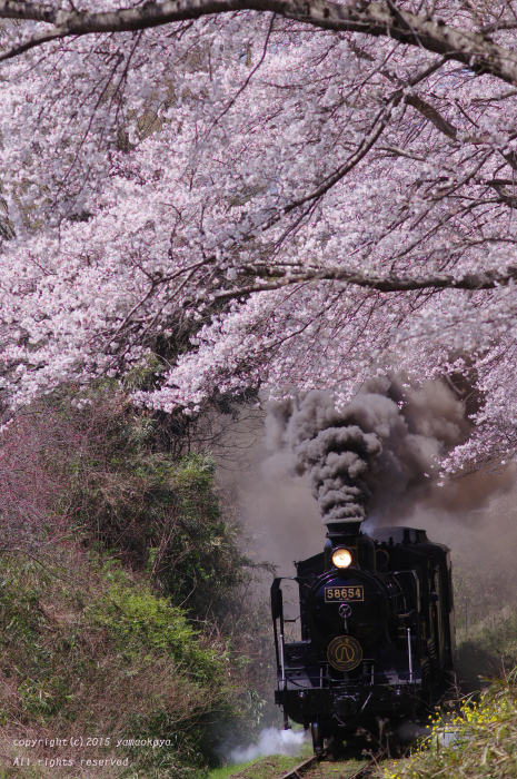 桜のトンネルをくぐって_d0309612_0372548.jpg