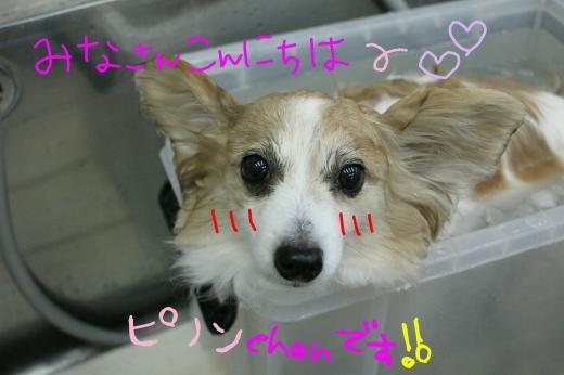 桜-!!_b0130018_16484206.jpg