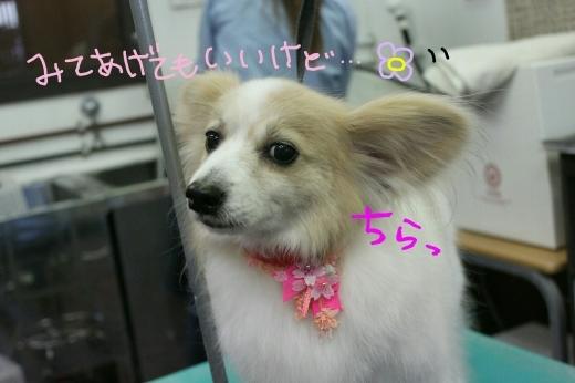 桜-!!_b0130018_16484376.jpg