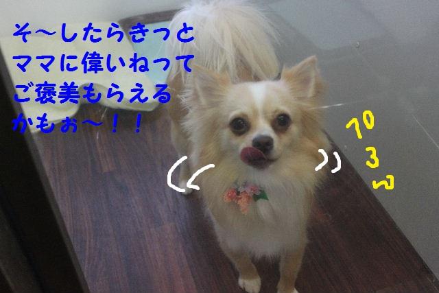 b0130018_22565123.jpg
