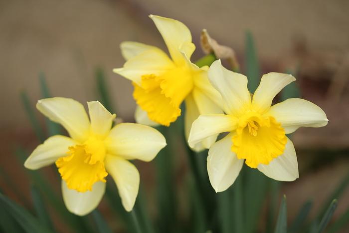 春と共に、パチンコ屋通いは終わり_d0150720_17483959.jpg
