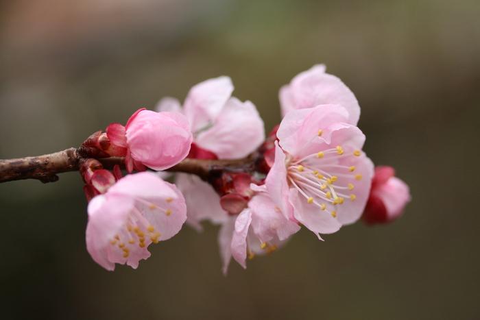 春と共に、パチンコ屋通いは終わり_d0150720_1749207.jpg
