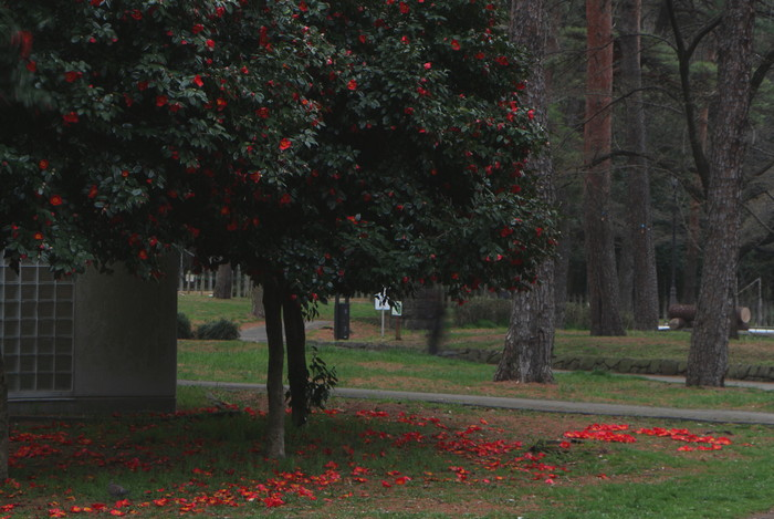 春と共に、パチンコ屋通いは終わり_d0150720_17511066.jpg