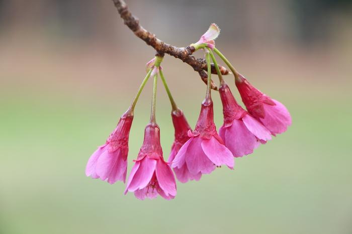 春と共に、パチンコ屋通いは終わり_d0150720_1833515.jpg