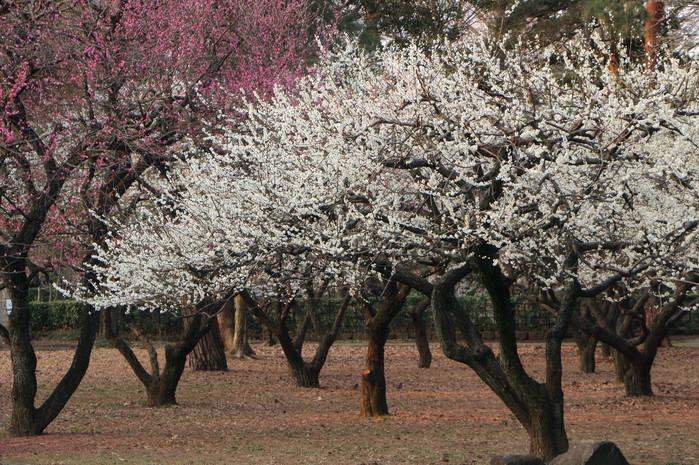 春と共に、パチンコ屋通いは終わり_d0150720_1843295.jpg