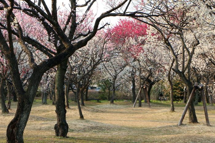 春と共に、パチンコ屋通いは終わり_d0150720_18433748.jpg