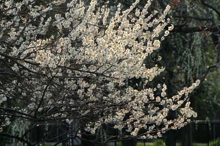 春と共に、パチンコ屋通いは終わり_d0150720_18444026.jpg