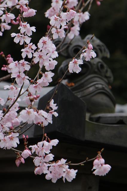 春と共に、パチンコ屋通いは終わり_d0150720_1891413.jpg
