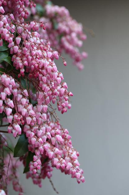 春と共に、パチンコ屋通いは終わり_d0150720_19291677.jpg