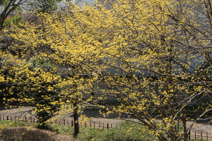 春と共に、パチンコ屋通いは終わり_d0150720_195811.jpg