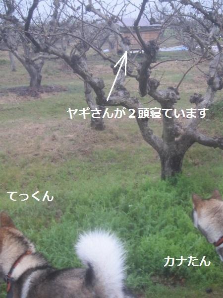 f0143123_20124355.jpg