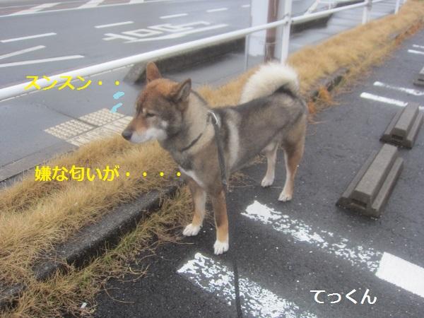 f0143123_20223213.jpg