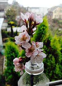 小さな花見_e0103024_23355010.jpg