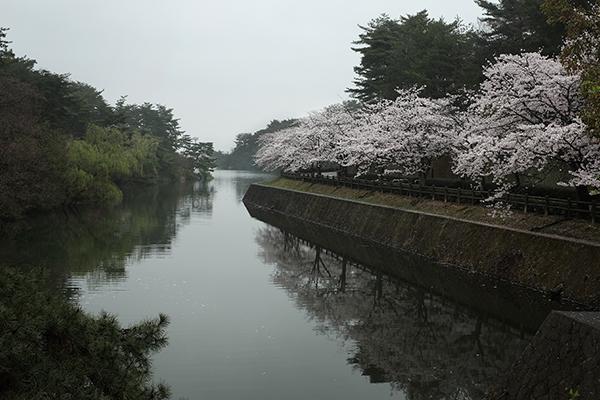 桜にあわば_a0097735_21533737.jpg