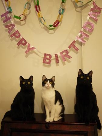 お誕生日猫 ぎゃぉすてぃぁらみるきぃ2歳編。_a0143140_2331371.jpg