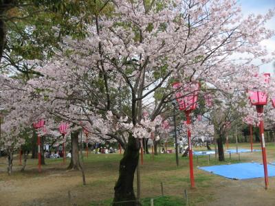 高知城の桜_f0006356_17575522.jpg