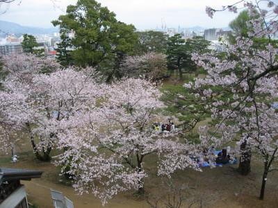高知城の桜_f0006356_17582186.jpg