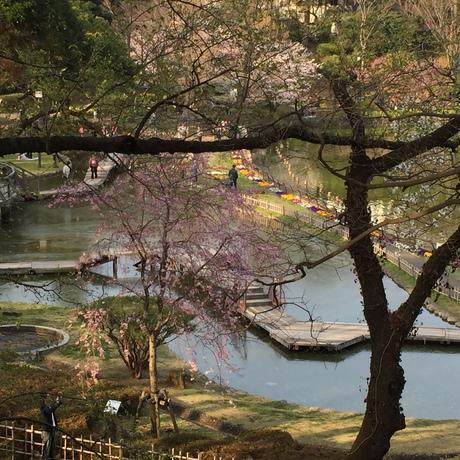 2015桜前線〜〜_c0131063_18585654.jpg