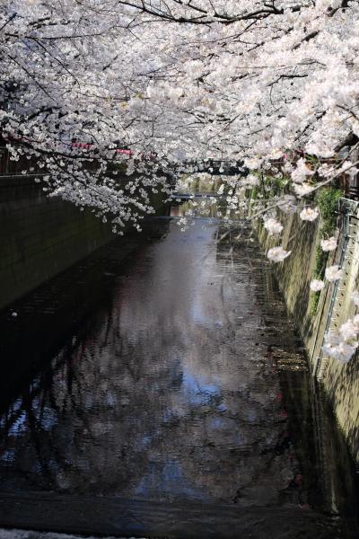 目黒川 2_b0188569_16121564.jpg