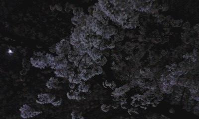 f0140174_11543.jpg