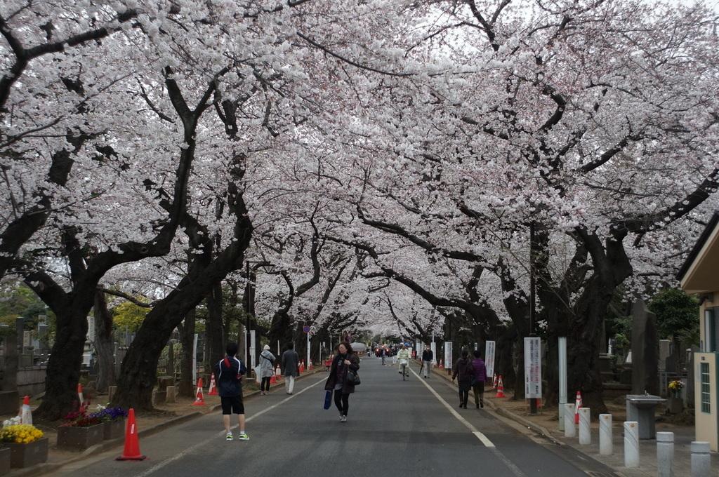 日曜日の上野から谷中(続いてます)_c0180686_16592210.jpg