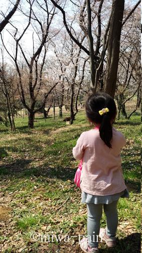 【代々木公園お花見週末】クラフトビールの祭典ビアニスタ_e0197587_00170509.jpg