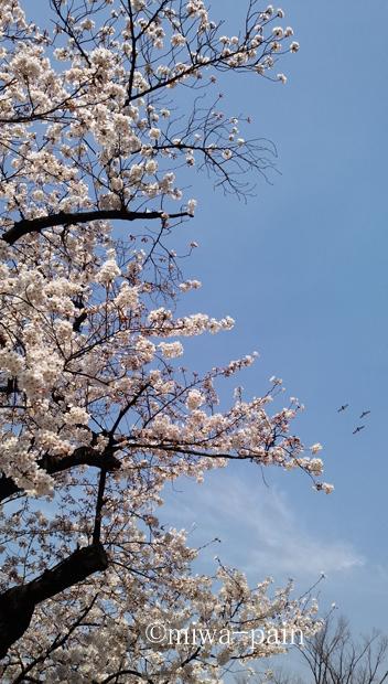 【代々木公園お花見週末】クラフトビールの祭典ビアニスタ_e0197587_00170529.jpg
