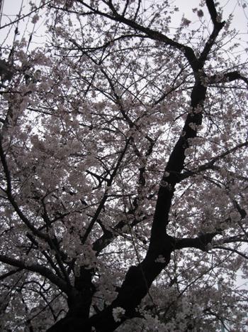 お花見日和_f0061394_14575414.jpg