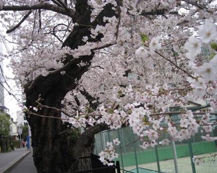 お花見日和_f0061394_145764.jpg