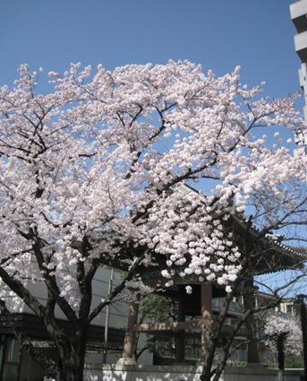 お花見日和_f0061394_15234261.jpg