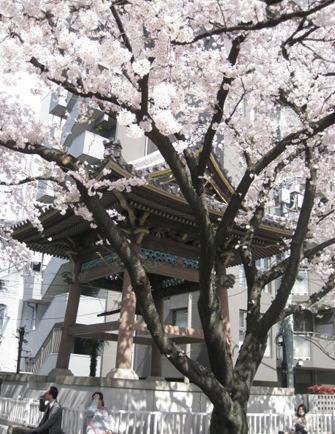 お花見日和_f0061394_1524171.jpg