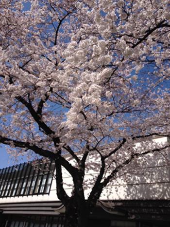 お花見日和_f0061394_15261422.jpg