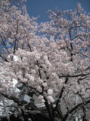 お花見日和_f0061394_15332281.jpg
