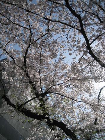 お花見日和_f0061394_1555964.jpg