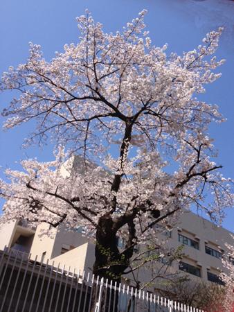 お花見日和_f0061394_158368.jpg