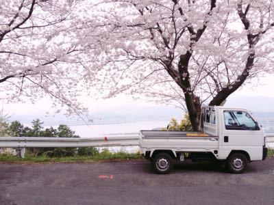 桜_a0300410_21335452.jpg