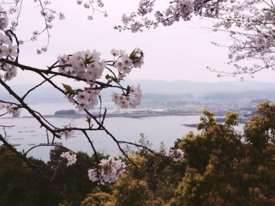 桜_a0300410_213355100.jpg