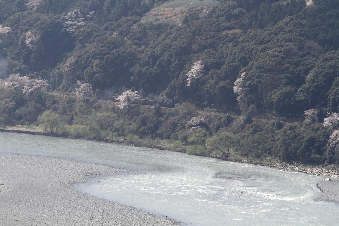 大井川が波立ち常緑の山が華やかになる季節 - 2014年・大井川 -   _b0190710_23313623.jpg