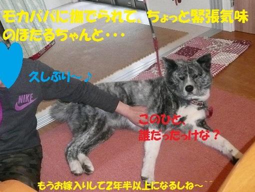 f0121712_1665648.jpg
