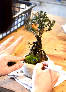 盆栽教室「春楽桜花」展 ありがとうございました_d0263815_15244243.jpg