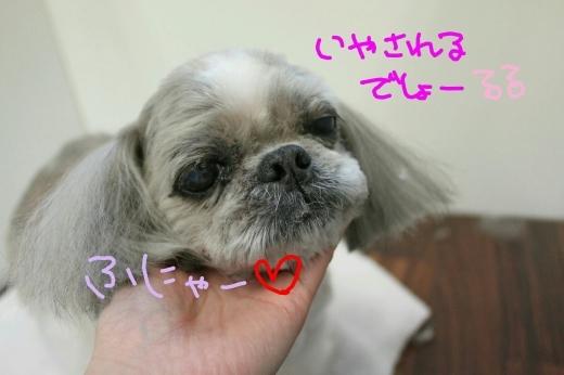 桜-!!_b0130018_23250670.jpg