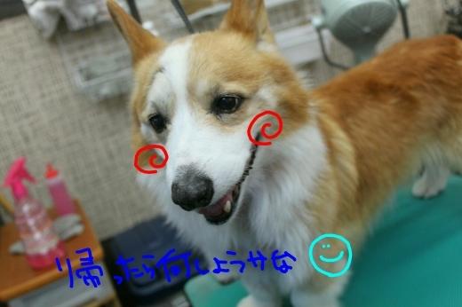 桜-!!_b0130018_23292553.jpg