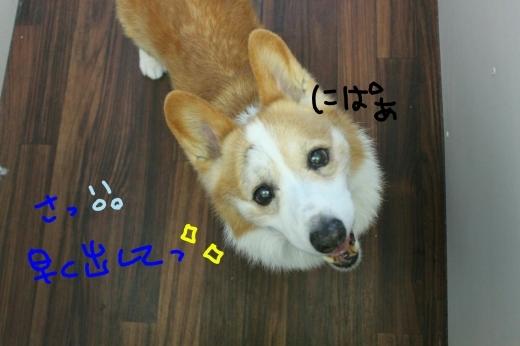 桜-!!_b0130018_23292654.jpg