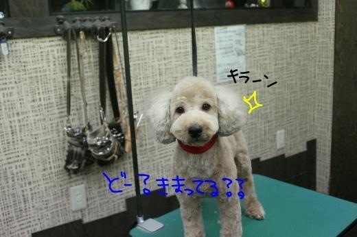 桜-!!_b0130018_23371314.jpg
