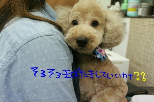 桜-!!_b0130018_23371434.jpg