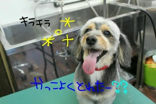 桜-!!_b0130018_23545061.jpg