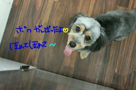 桜-!!_b0130018_23545068.jpg